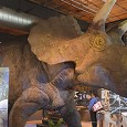 BY CARSON DESHEVY-RENOUF THEMUSEUM in downtown Kitchener held a grand opening on March 7 for its newest exhibit, Dinosaurs: The Edge of Extinction. This exhibit is giving guests the chance...