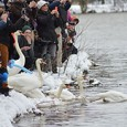 BY ETHAN KOMPF Stratford welcomed spring 10 days ago during its annual Swan Weekend, which took place on April 2 and 3. Every year Stratford holds an event which includes...