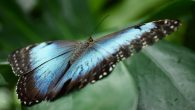 BY DEEANNA ROLLINS The Cambridge Butterfly Conservatory is a beautiful place to go and visit, full of anywhere from 1,500 to 2,000 colourful butterflies, turtles, finches, doves, quail and an...